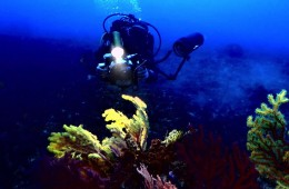 diving-scilla